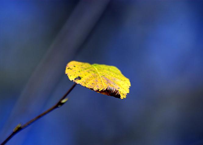 A single yellow autumn leaf
